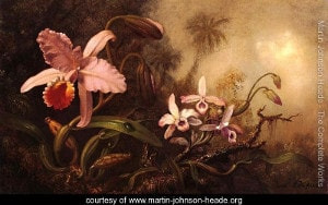Orchids And A Beetle by Martin Johnson Heade