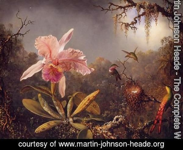 Orchids And Hummingbirds by Martin Johnson Heade Oil Painting Art Reproduction