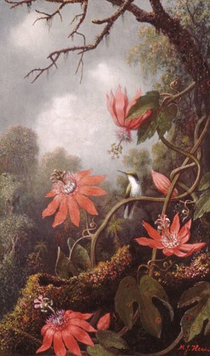 Martin Johnson Heade - Hummingbird and Passionflowers