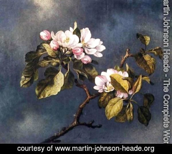 Martin Johnson Heade - Apple Blossoms 2