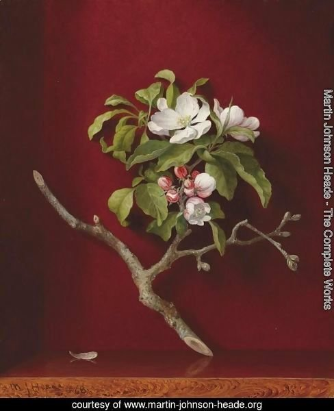 Apple Blossoms in a Corner