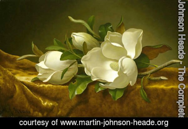 Martin Johnson Heade - Magnolias on Gold Velvet Cloth 1888