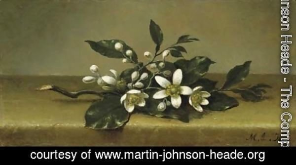 Martin Johnson Heade - Branch of Orange Blossoms