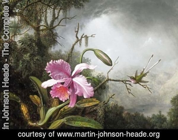 Martin Johnson Heade - Orchid and Hummingbird, After a Storm