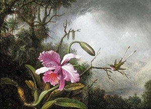Orchid and Hummingbird, After a Storm