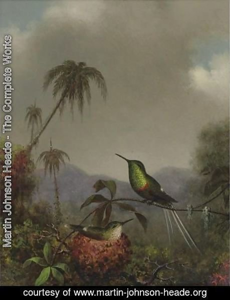 Martin Johnson Heade - Two Thorn-Tails (Langsdorffs Thorn-Tail, Brazil)