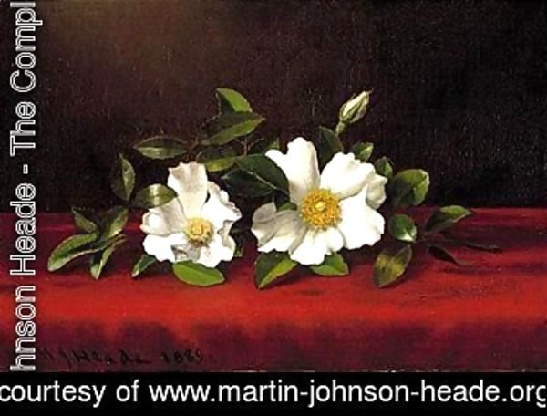 Two cherokee roses on red velvet 1889
