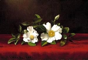 Martin Johnson Heade - Two cherokee roses on red velvet 1889