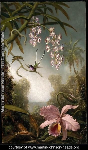 Martin Johnson Heade - Orchids and Spray Orchids with Hummingbird
