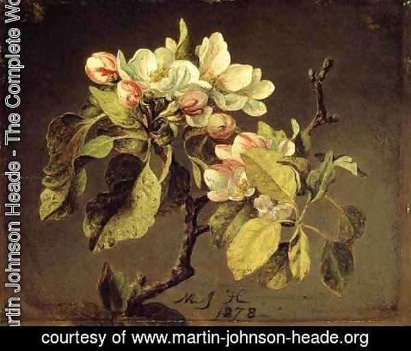 Martin Johnson Heade - A Branch Of Apple Blossoms And Buds