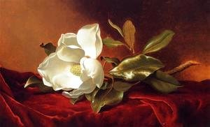 Martin Johnson Heade - A Magnolia On Red Velvet