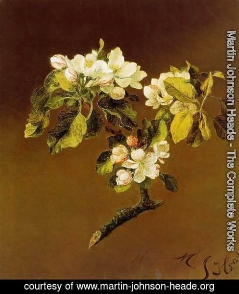 Martin Johnson Heade - A Spray Of Apple Blossoms