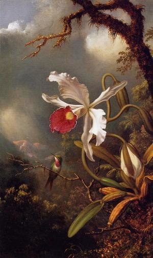 Martin Johnson Heade - An Amethyst Hummingbird With A White Orchid