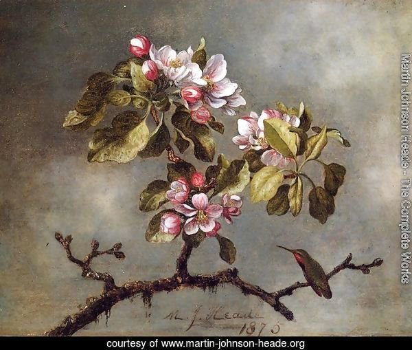 Apple Blossoms And Hummingbird2