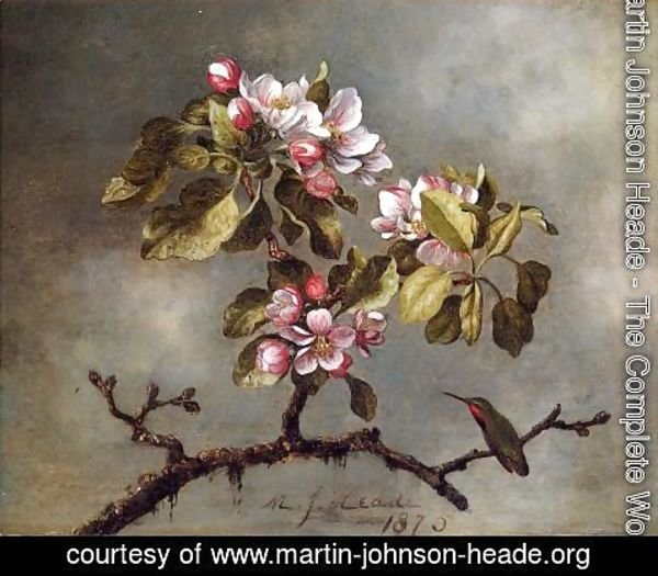 Martin Johnson Heade - Apple Blossoms And Hummingbird2