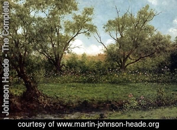 Martin Johnson Heade - Asters In A Field Aka Brookside