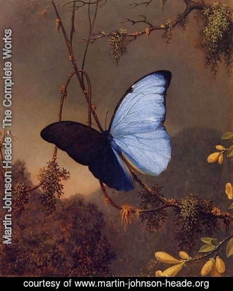 Martin Johnson Heade - Blue Morpho Butterfly