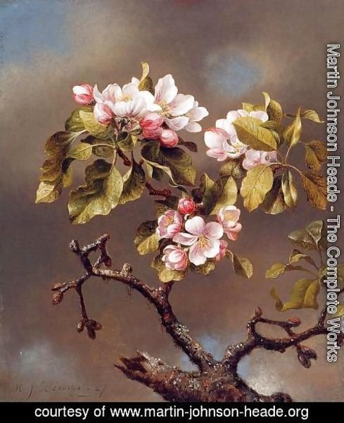 Martin Johnson Heade - Branch Of Apple Blossoms Against A Cloudy Sky