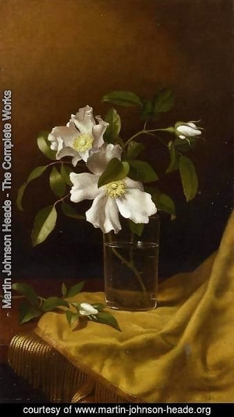 Martin Johnson Heade - Cherokee Roses In A Glass On Gold Velvet Plush