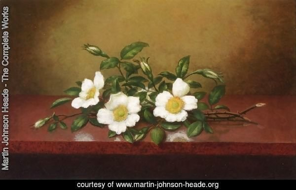 Cherokee Roses On A Shiney Table