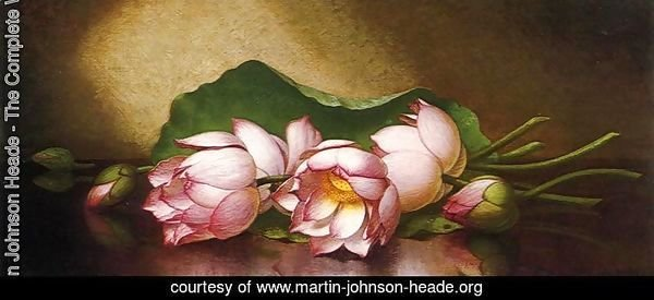 Martin Johnson Heade The Complete Works Egyptian Lotus Blossom
