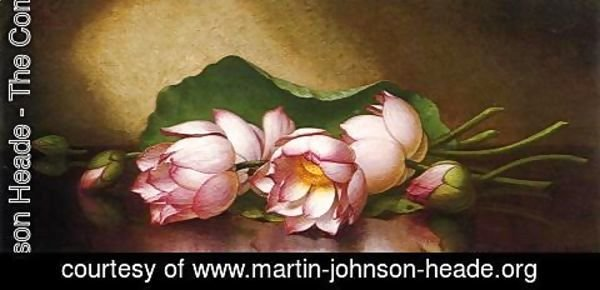 Martin Johnson Heade - Egyptian Lotus Blossom