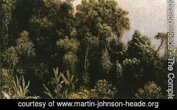 Martin Johnson Heade - Forest Study  Brazil
