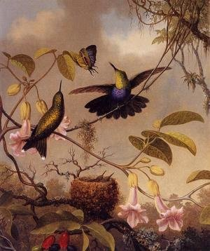 Martin Johnson Heade - Fort Tailed Woodnymph