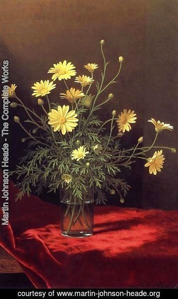 Martin Johnson Heade - Golden Marguerites