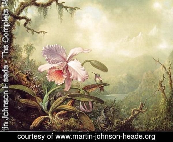 Martin Johnson Heade - Heliodores Woodstar And A Pink Orchid