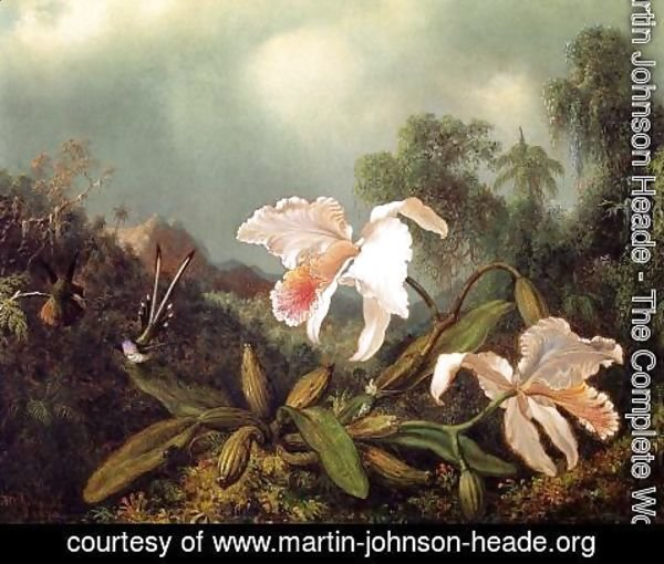 Martin Johnson Heade - Jungle Orchids And Hummingbirds