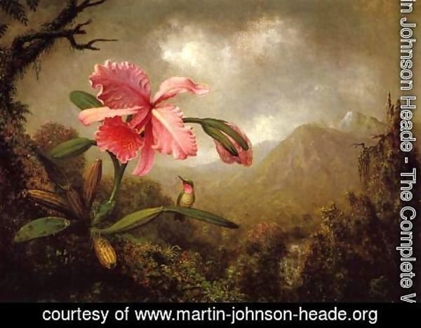 Martin Johnson Heade - Orchid And Hummingbird Near A Mountain Waterfall