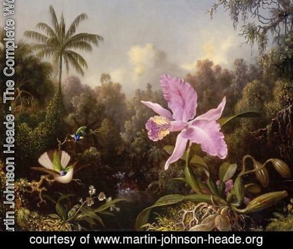 Martin Johnson Heade - Orchid And Two Hummingburds
