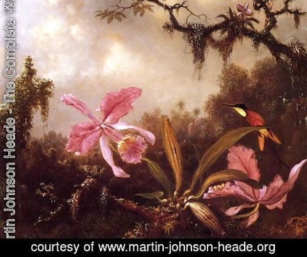 Martin Johnson Heade - Orchids And Crimson Topaz Hummingbird