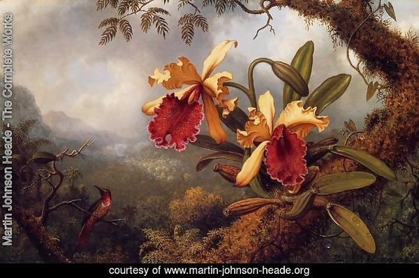 Orchids And Hummingbird3