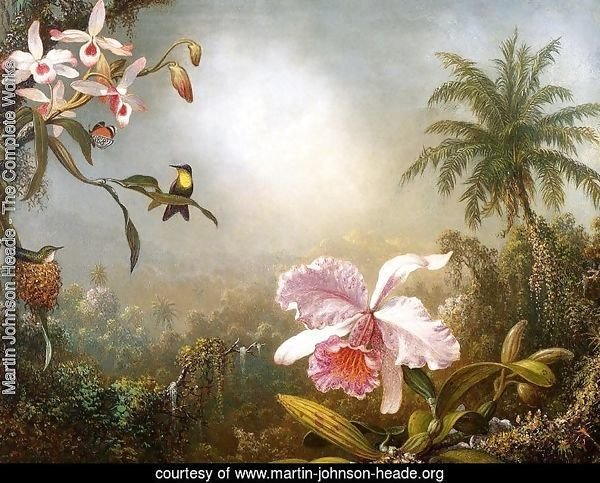Orchids  Nesting Hummingbirds And A Butterfly