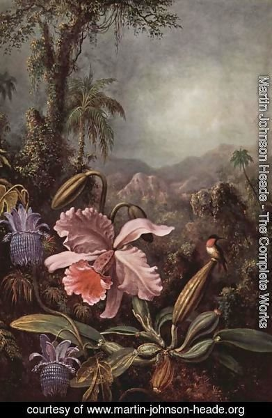 Martin Johnson Heade - Orchids  Passion Flowers And Hummingbird
