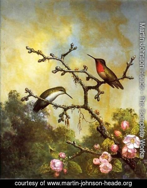 Martin Johnson Heade - Ruby Throated Hummingbirds With Apple Blossoms
