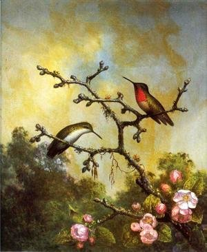 Ruby Throated Hummingbirds With Apple Blossoms