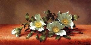 Martin Johnson Heade - The Cherokee Rose