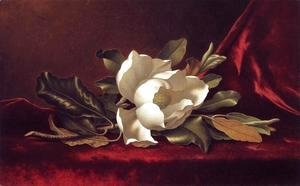 Martin Johnson Heade - The Magnolia Blossom