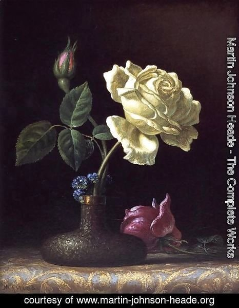 Martin Johnson Heade - The White Rose