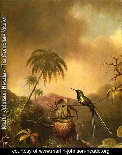 Martin Johnson Heade - Thorn Tail  Brazil