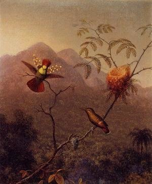 Martin Johnson Heade - Tufted Coquette
