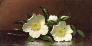 Martin Johnson Heade - Two Cherokee Rose Blossoms On A Table Aka Cherokee Roses
