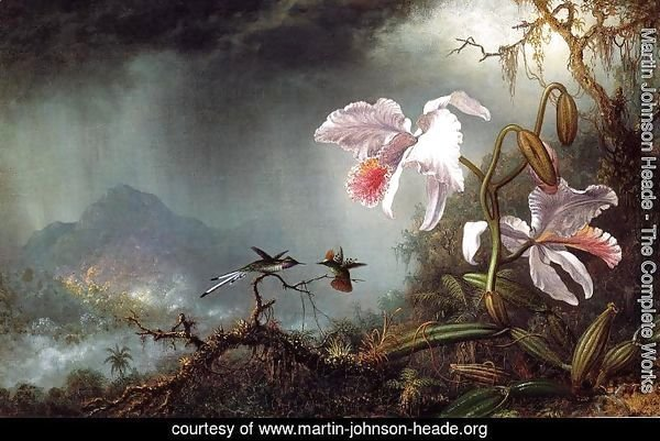 Two Fighting Hummingbirds With Two Orchids