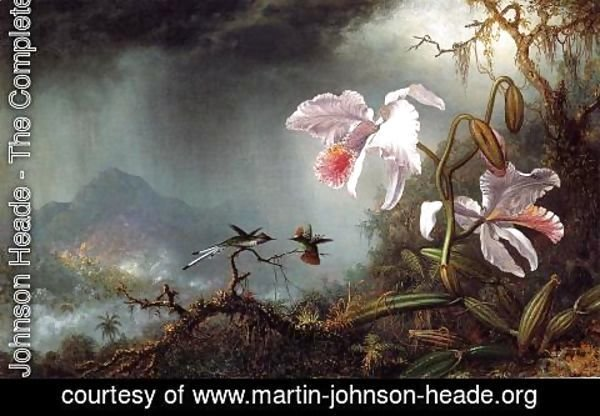Martin Johnson Heade - Two Fighting Hummingbirds With Two Orchids