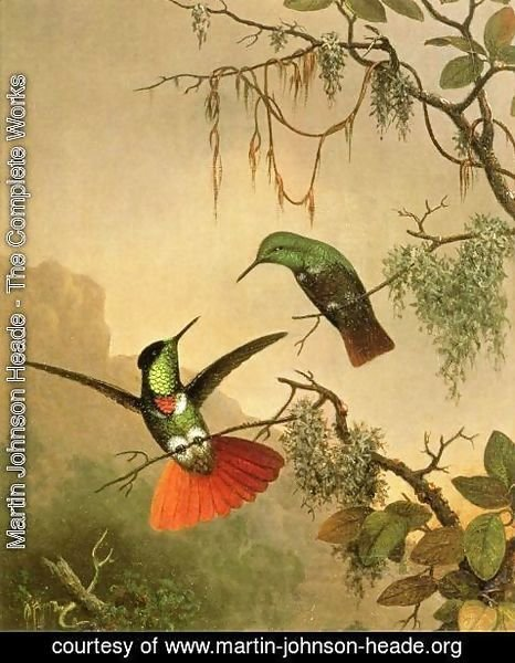 Martin Johnson Heade - Two Hooded Visorbearer Hummingbirds