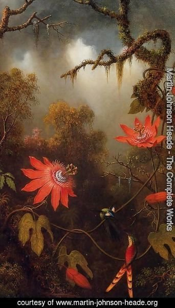 Martin Johnson Heade - Two Hummingbirds Perched On Passion Flower Vines