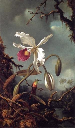 Martin Johnson Heade - White Brazilian Orchid